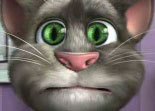 Chat Talking Tom 2